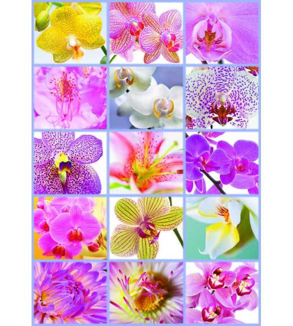 Пазлы Цветочный коллаж 1500