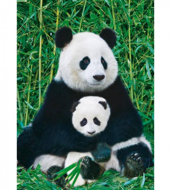 Пазлы Панда с детенышем 1000