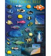 Пазлы Коралловый риф 1000