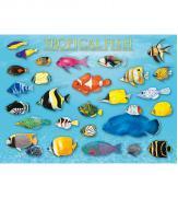 Пазлы Тропические рыбы 1000