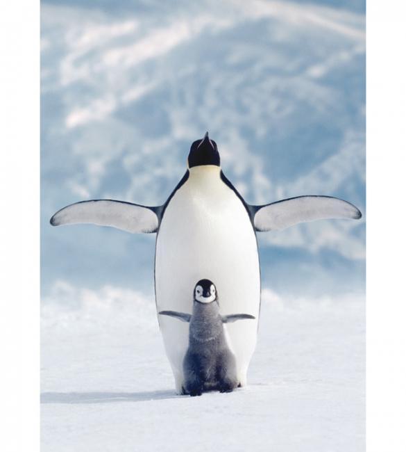 Пазлы Пингвин с пингвиненком 1000