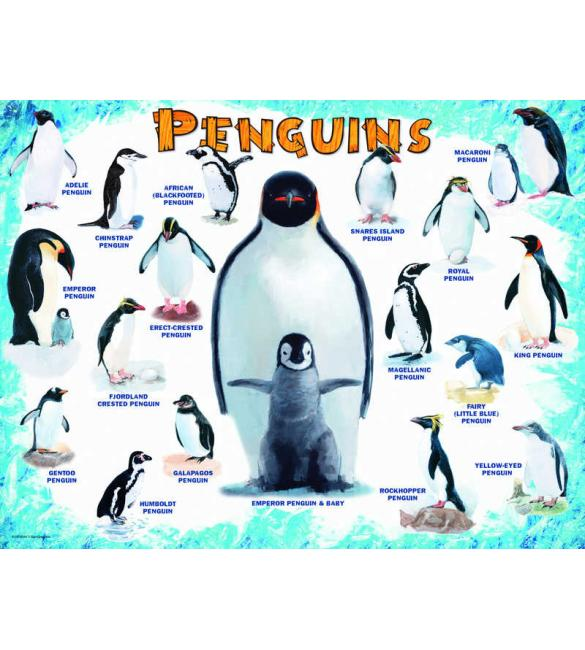 Пазлы Пингвины 100