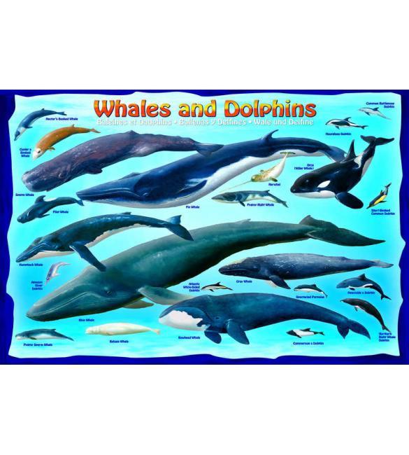 Пазлы Киты и дельфины 100