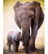 Пазлы Слониха и слоненок 100