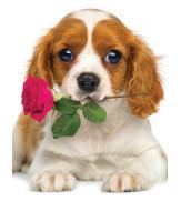Пазлы Песик с розой 100