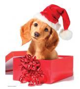 Пазлы Праздничный щенок 100