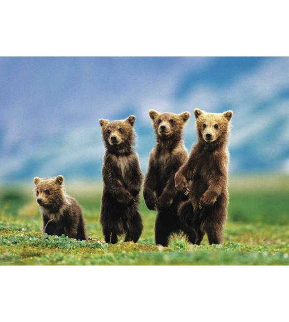 Пазлы Медвежата 300