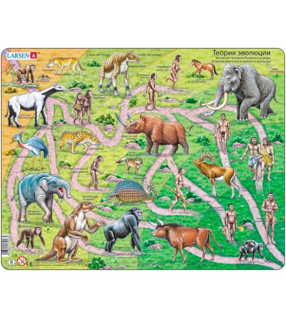 Пазлы Теория эволюции
