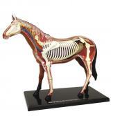 Объемная анатомическая модель Лошадь