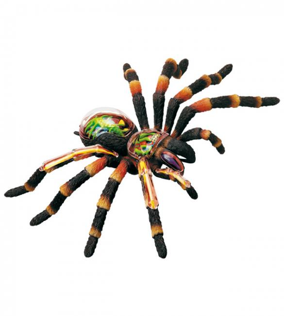 Объемная анатомическая модель Паук тарантул