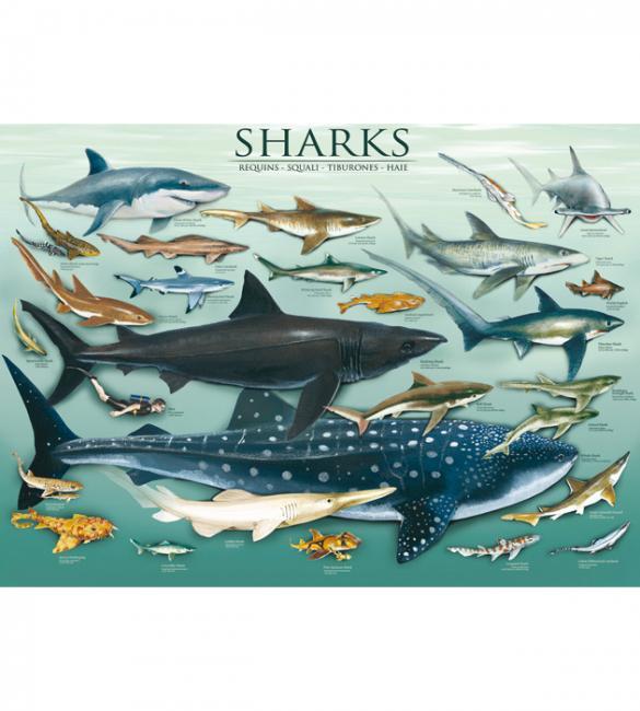 Пазлы Акулы 1000