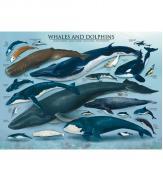 Пазлы Киты и дельфины 1000