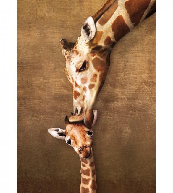 Пазлы Жирафы - материнский поцелуй 1000