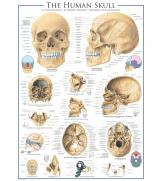 Пазлы Человеческий череп 1000