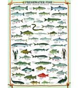 Пазлы Пресноводные рыбы 1000