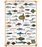 Пазлы Морские рыбы 1000