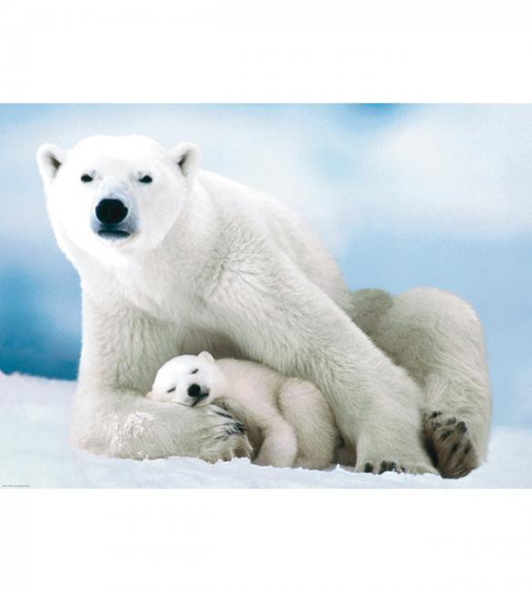 Пазлы Белая медведица с медвежонком 1000